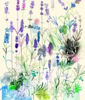 lavender low res