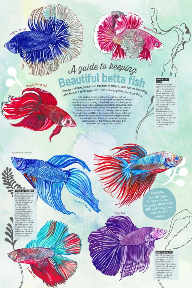 Betta_fish_layout_final