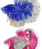 FB 1 FISH
