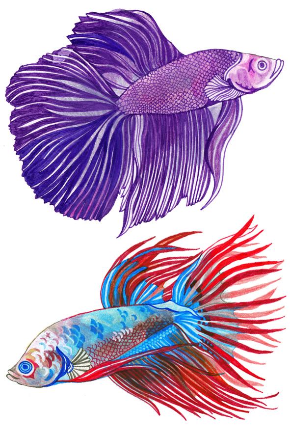 FB FISH 2