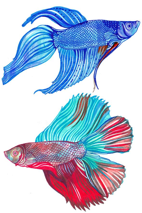 FB FISH 3