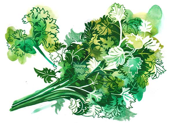 parsley illo