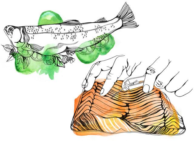 fish omag