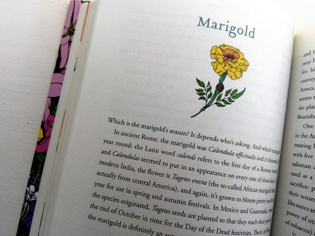 MARIGOLD CHOICE