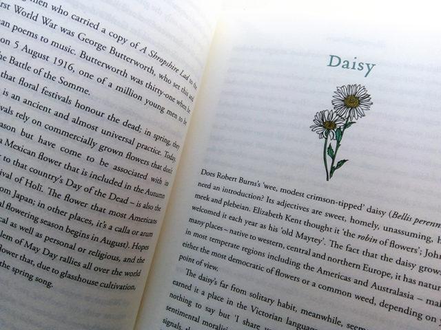 daisy CHOOICE